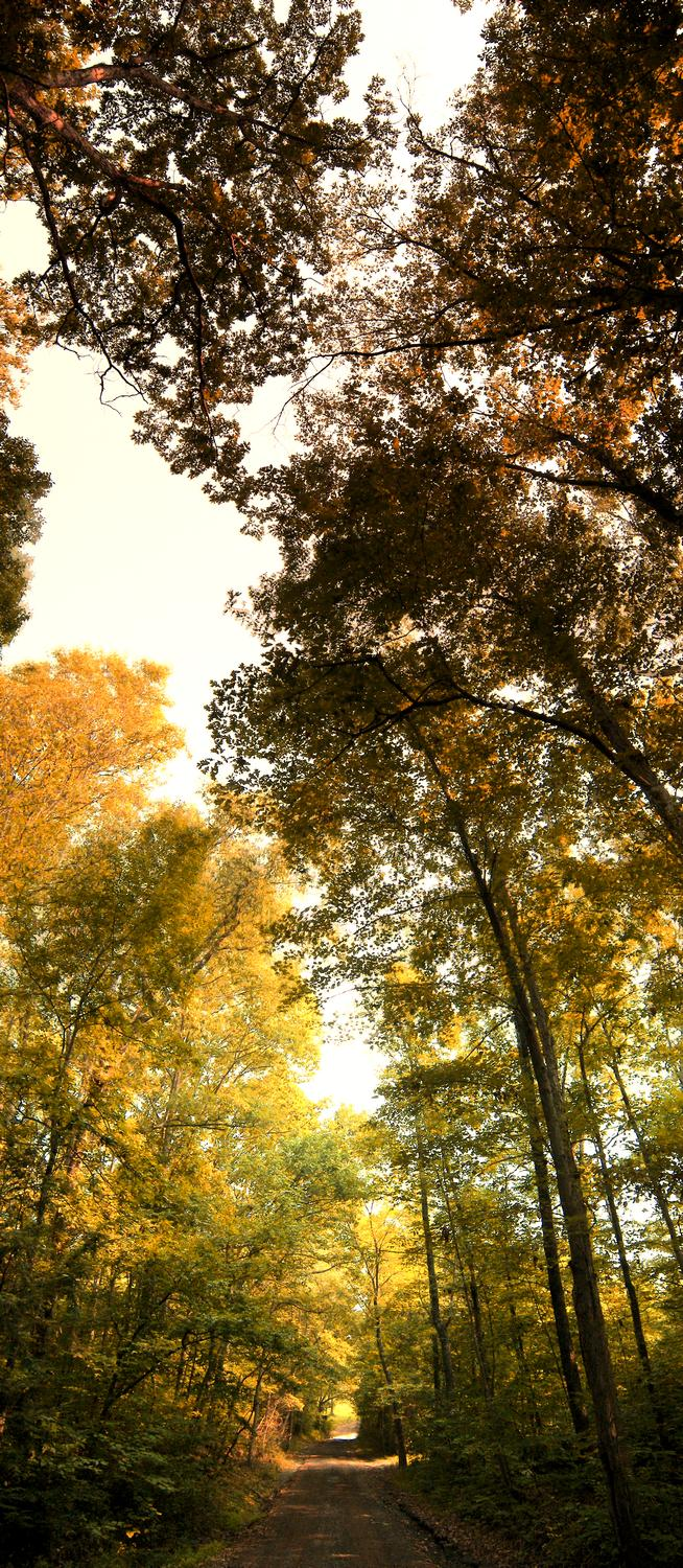 vertical panorama - autumn - Some pictures from my Kodak P880 - Part 1 - Kodak Easyshare P880 - Tony Karp, design, art, photography, techno-impressionist, techno-impressionism, aerial photography , drone , drones , dji , mavic pro , video , 3D printing - Books -