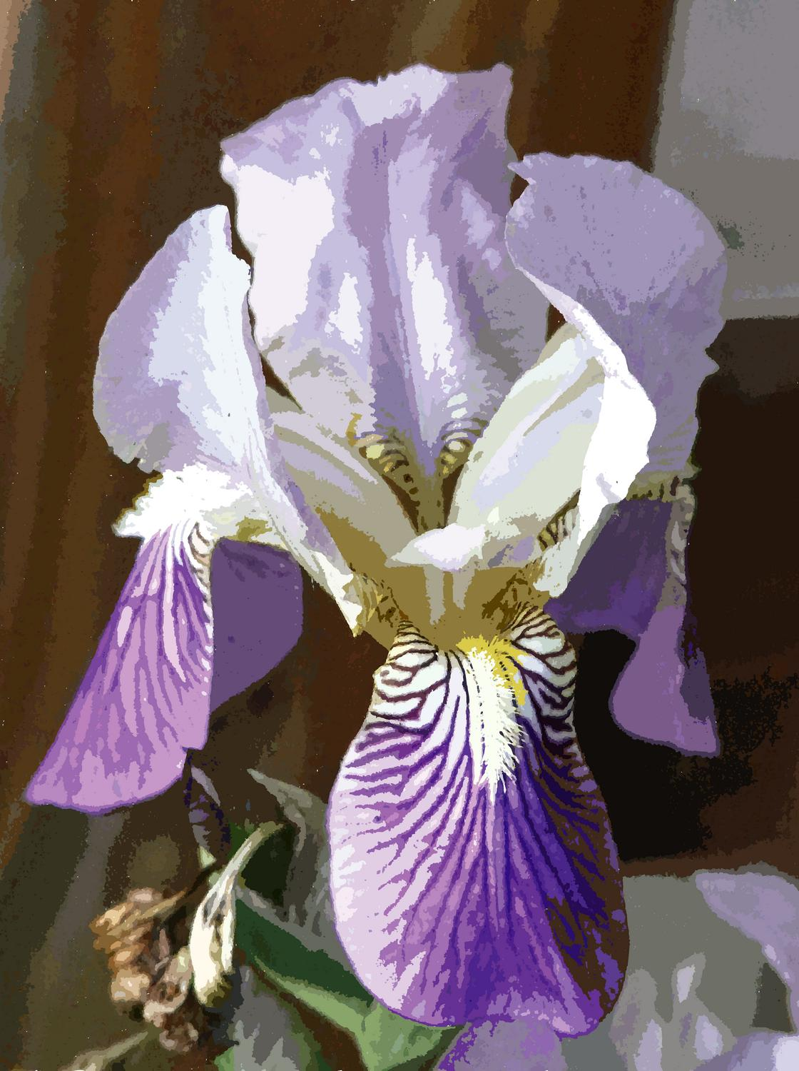 - The iris converted to PostScript. Now it consists of shapes filled with solid colors. - Panasonic DMC-FZ18 - iris - many variations on one photograph - Tony Karp, design, art, photography, techno-impressionist, techno-impressionism, aerial photography , drone , drones , dji , mavic pro , video , 3D printing - Books -