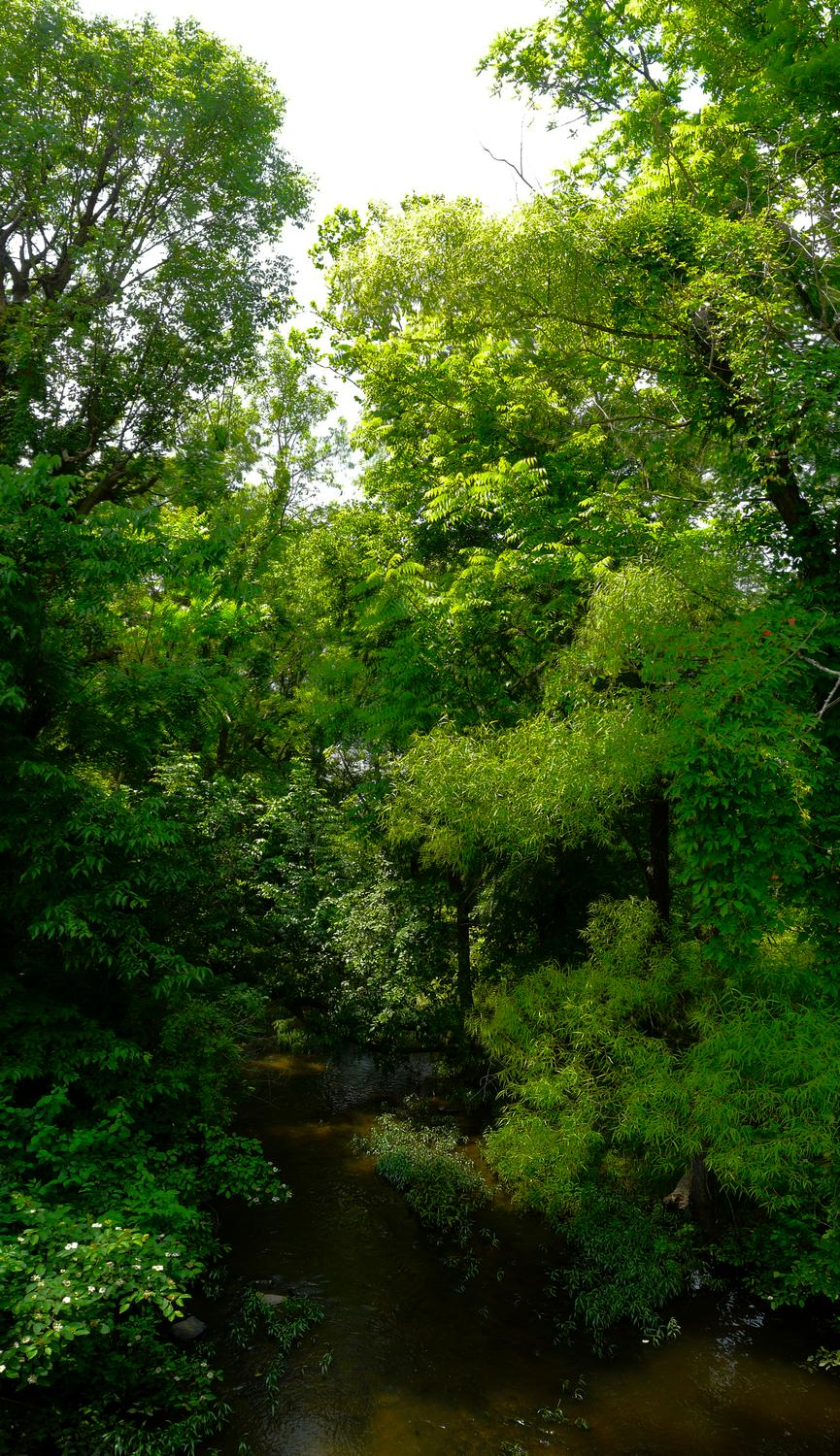 - A vertical panorama showing the trees along the banks of Chestnut Lick - Panasonic DMC-FZ18 - Tony Karp, design, art, photography, techno-impressionist, techno-impressionism, aerial photography , drone , drones , dji , mavic pro , video , 3D printing - Books -