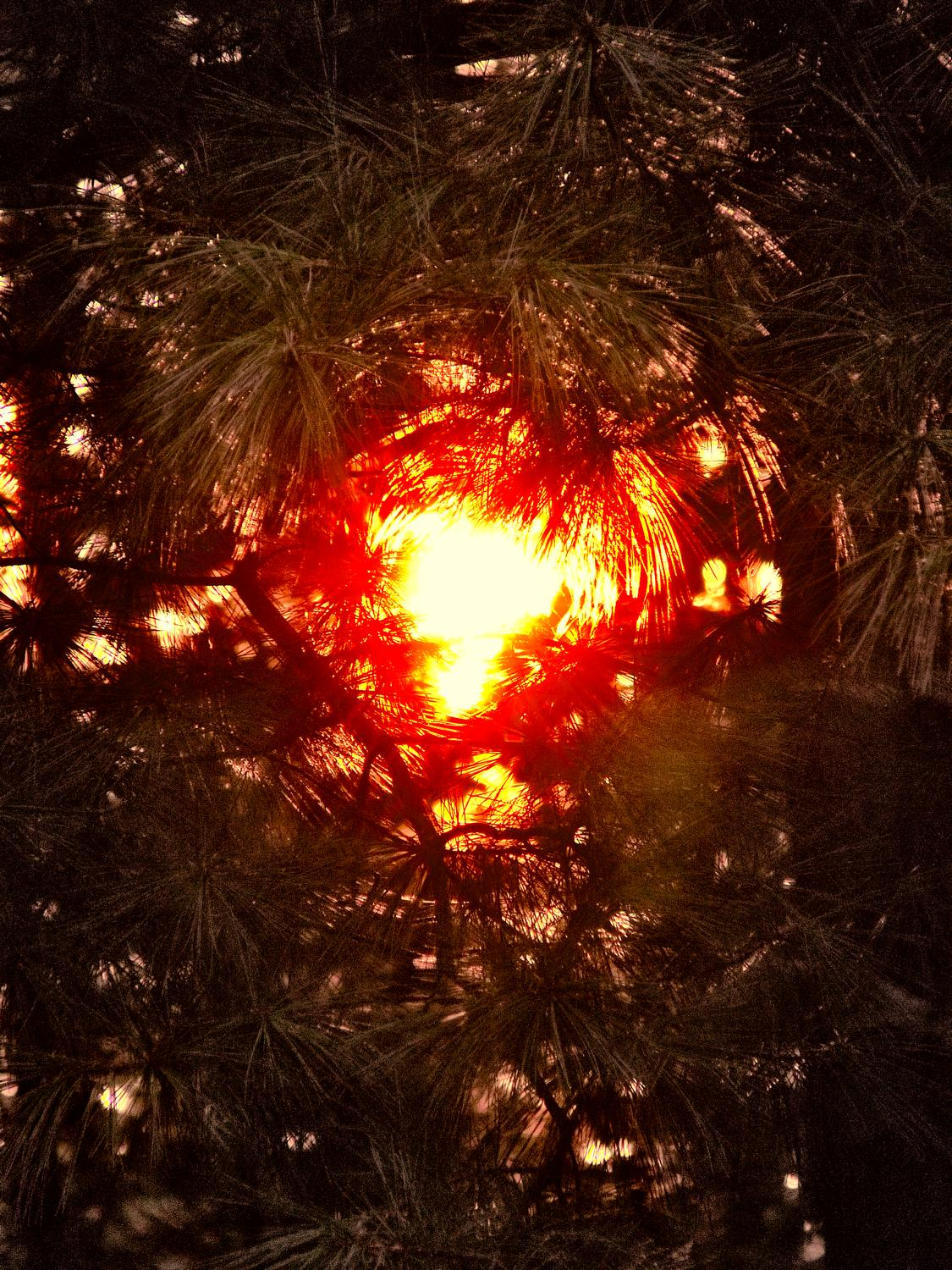 - A close look at the sun through pine needles - Panasonic DMC-FZ28 - Tony Karp, design, art, photography, techno-impressionist, techno-impressionism, aerial photography , drone , drones , dji , mavic pro , video , 3D printing - Books -