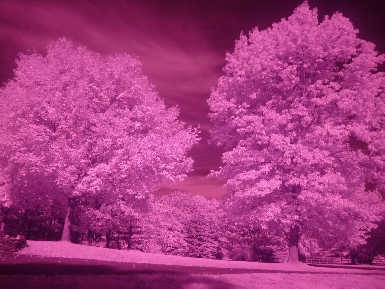 - Same as above, but with Hoya R72 filter. It has the classic infrared look, but overall pink. One second exposure, 100 ISO. - infrared photography with the Panasonic DMC-FZ28 - Tony Karp, design, art, photography, techno-impressionist, techno-impressionism, aerial photography , drone , drones , dji , mavic pro , video , 3D printing - Books -