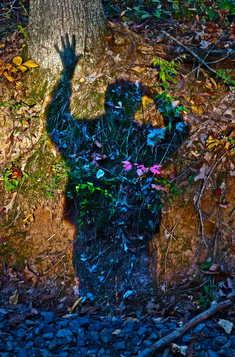 - Self portrait of the artist examining the spirit of a tree -  Panasonic DMC-FZ28 - Tony Karp, design, art, photography, techno-impressionist, techno-impressionism, aerial photography , drone , drones , dji , mavic pro , video , 3D printing - Books -