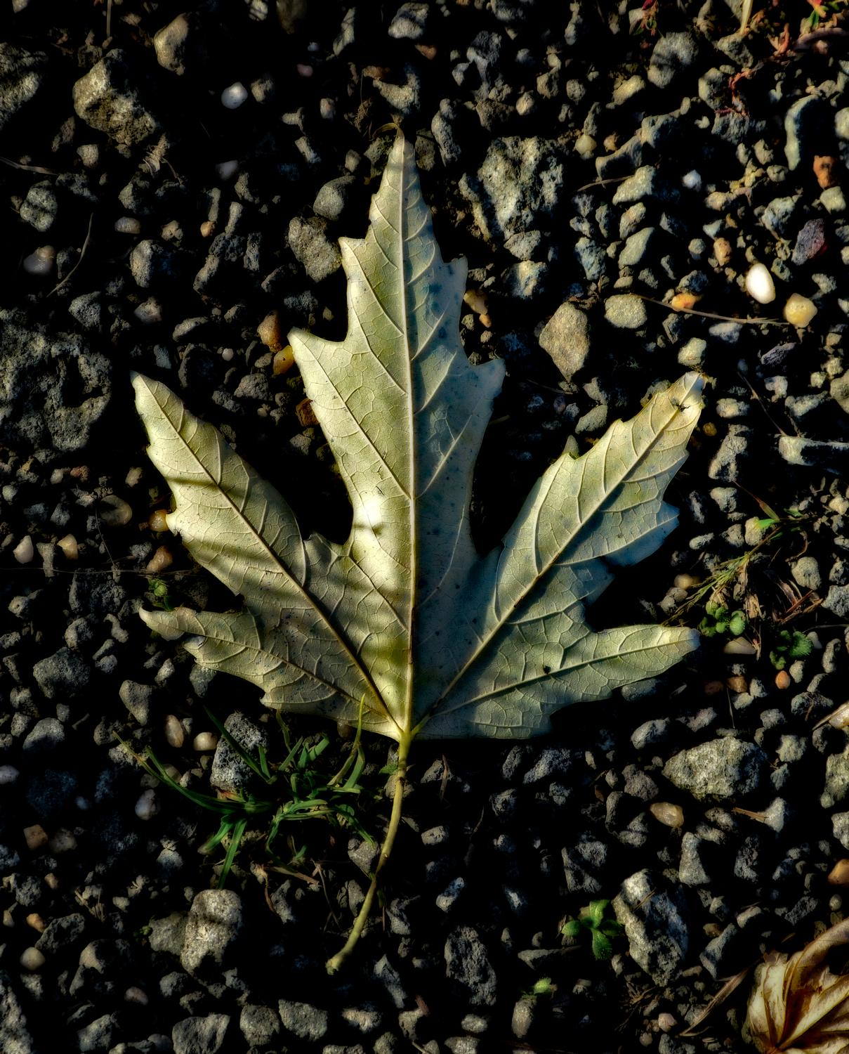- A leaf on gravel - Panasonic DMC-FZ150 <br>--- Click to see ORIGINAL --- -  Panasonic DMC-FZ150 - Tony Karp, design, art, photography, techno-impressionist, techno-impressionism, aerial photography , drone , drones , dji , mavic pro , video , 3D printing - Books -