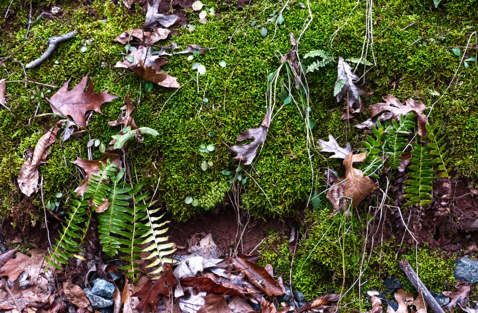 - moss and leaves - - Winter green <br>--- Click to see ORIGINAL --- -  Panasonic DMC-FZ150 - Tony Karp, design, art, photography, techno-impressionist, techno-impressionism, aerial photography , drone , drones , dji , mavic pro , video , 3D printing - Books -